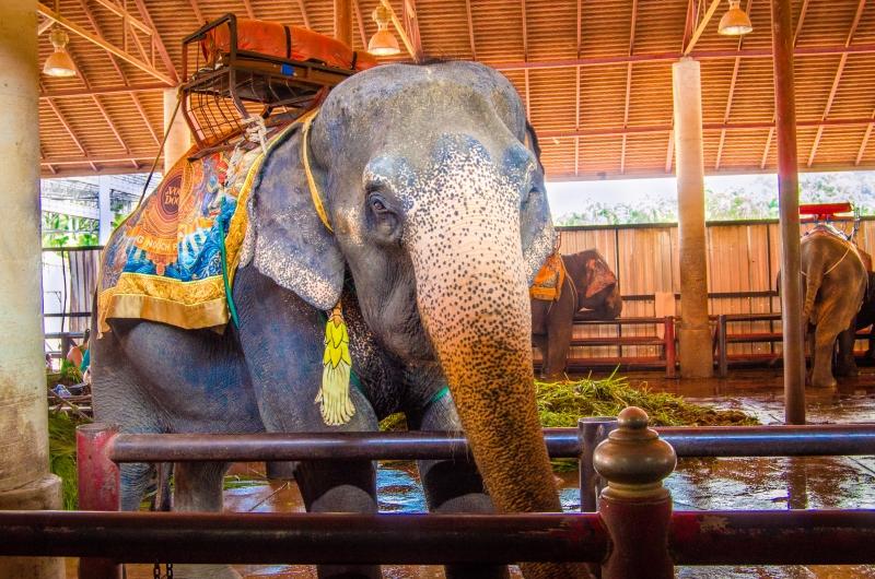 Thailand-126